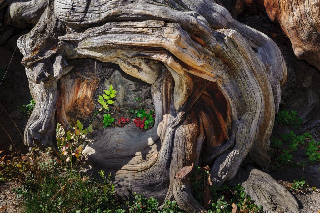 Paysages d'automne 09