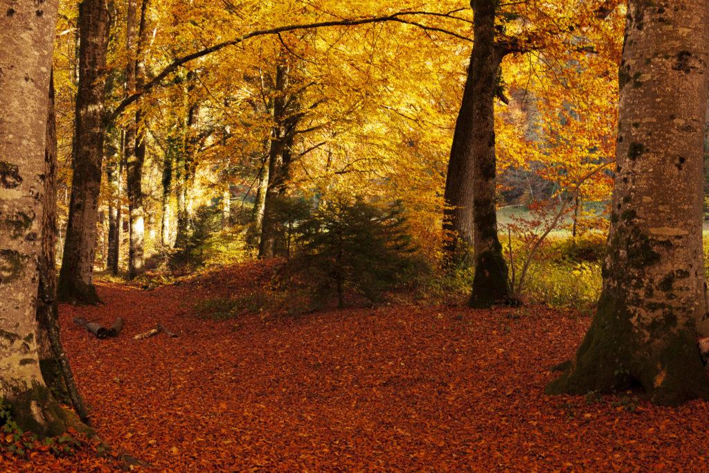Paysages d'automne 12