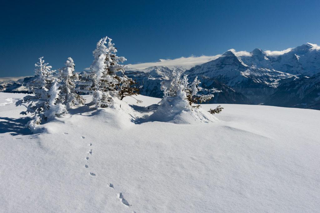 Paysages d'hiver 06